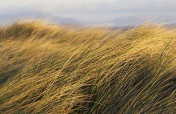 vetar u travi
